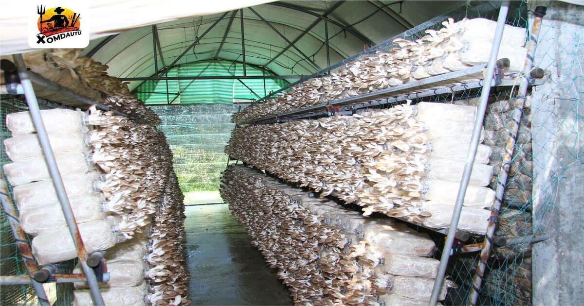 100 triệu kinh doanh gì ở nông thôn từ mô hình trồng nấm