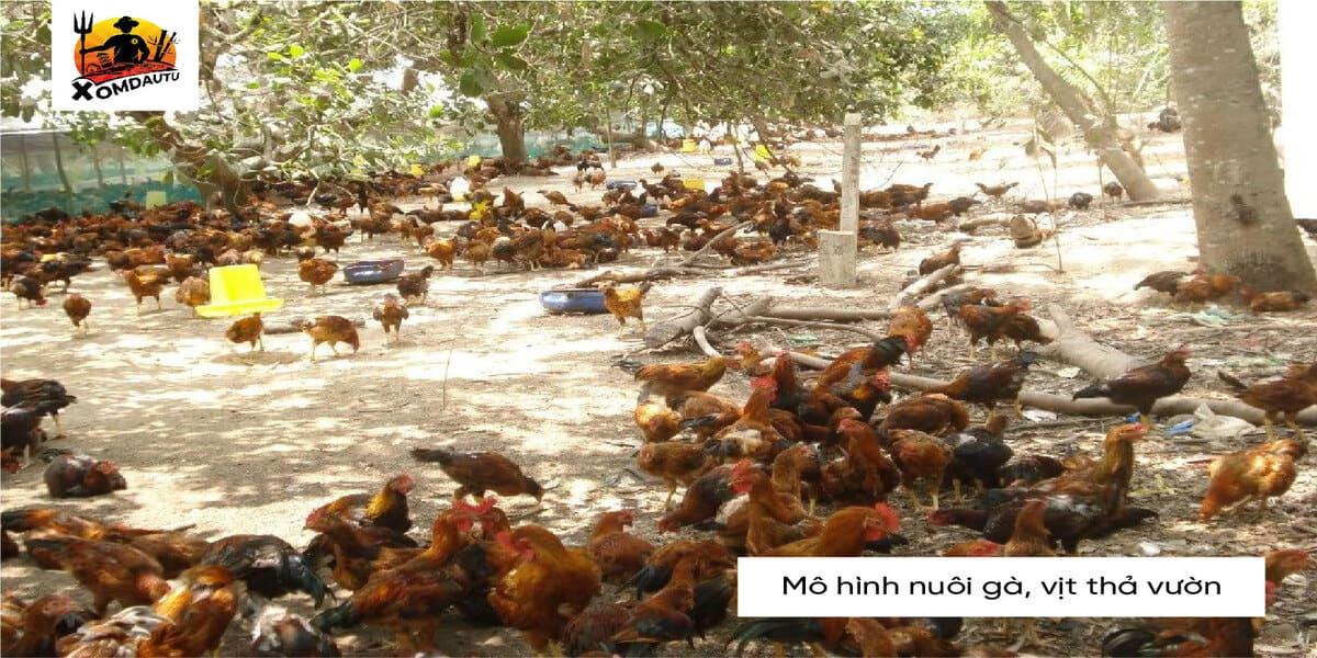 Mo Hinh Nuoi Ga Vit Tha Vuon